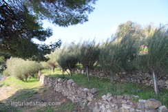lot for sale 5000 m² liguria imp-41938a 3