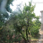 apartment for sale 150 m² liguria imp-41988 21