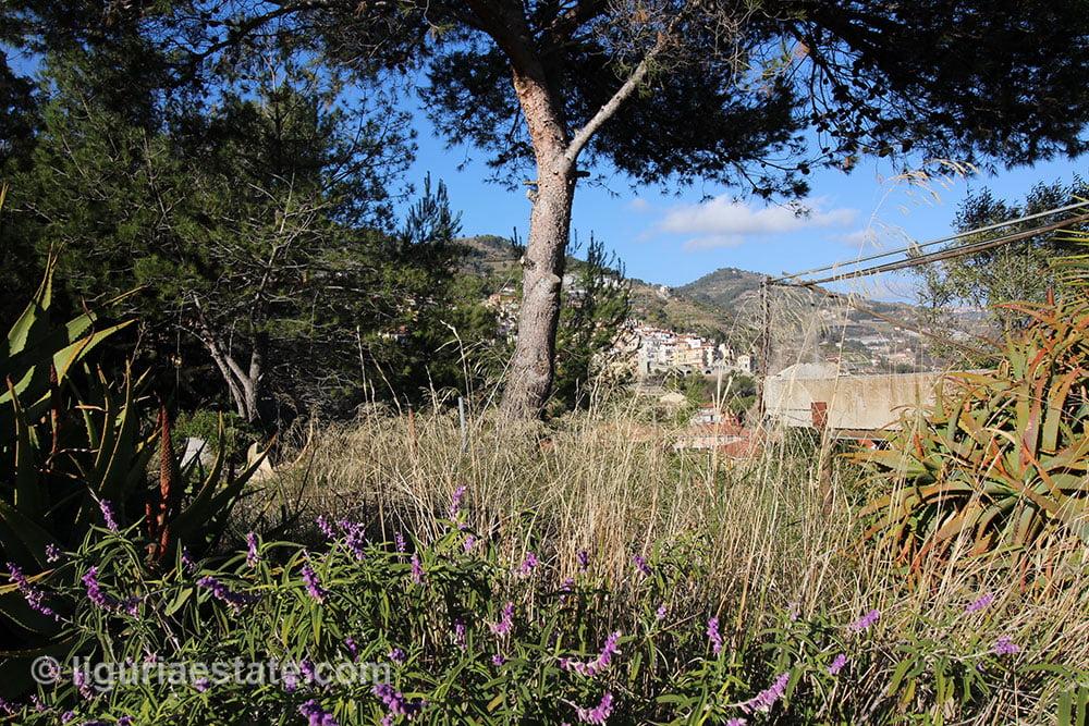 San biagio della cima villa for sale 235 imp 43059 07