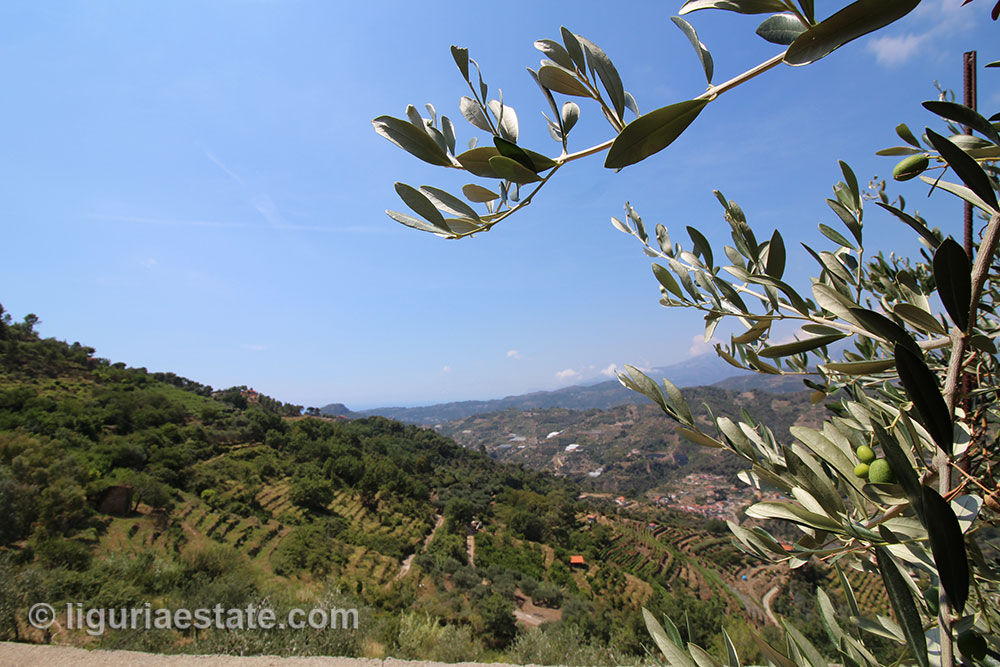 Country house for sale 260 m%c2%b2 liguria imp 42099 12