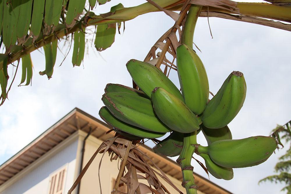 Bordighera liguria villa for sale 1000 41913 037