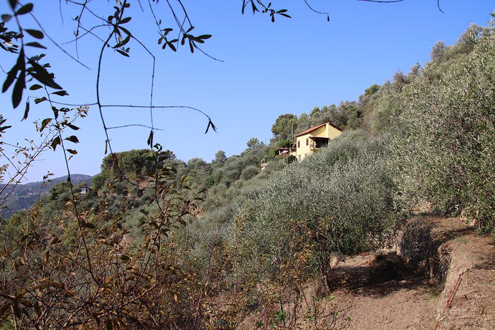 Dolceacqua liguria country house for sale 180 imp 44081 036
